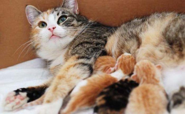 Nằm mơ thấy mèo đẻ con là điềm gì?