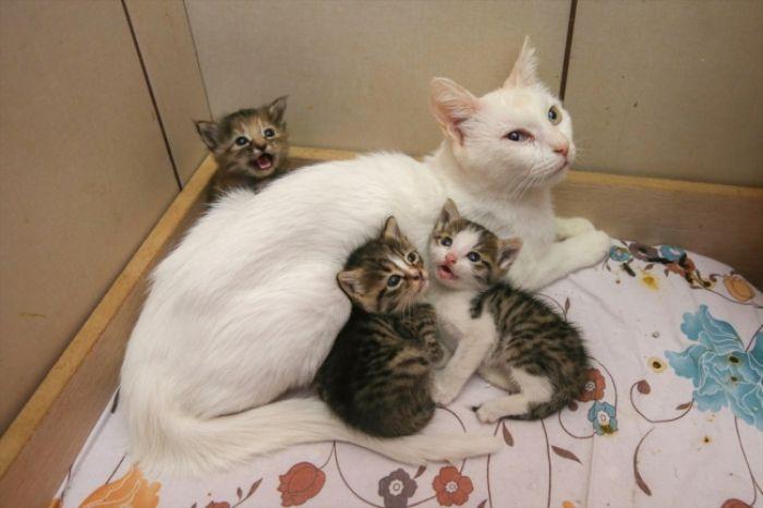 Ngủ mơ thấy mèo đẻ ra người yêu chọn ngay các số 27 - 08 - 31