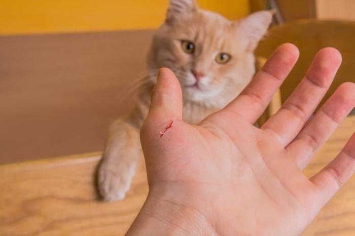 Nhưng nếu bạn mơ thấy bị mèo cắn thì hầu hết sẽ gặp những điều không may mắn