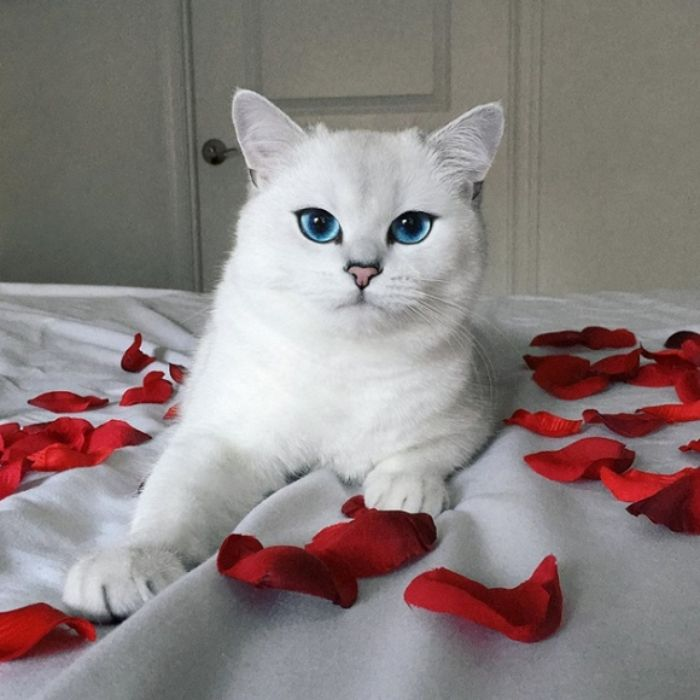 Mơ thấy mèo trắng chết thì anh em nên chọn con 81 - 35 - 48