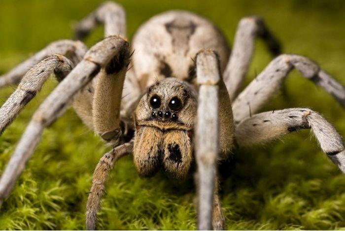 Nhưng thực tế lại cho thấy, giấc mơ về nhện lại mang lại cho chúng ta những may mắn riêng