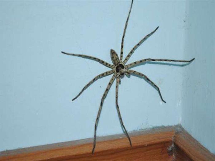 Mơ thấy nhện trong nhà tốt hay xấu