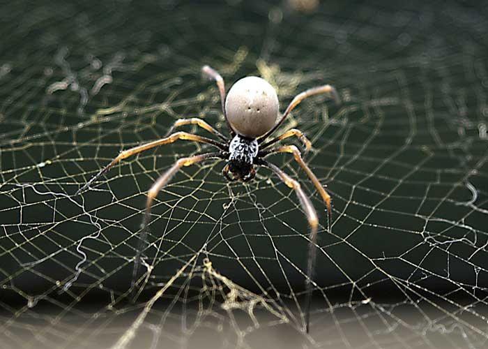 Mơ thấy bị cuốn vào tơ nhện