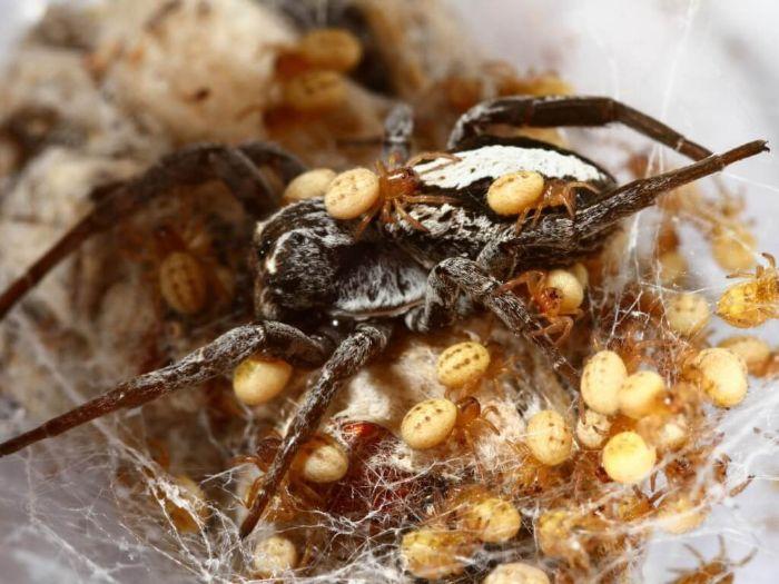 Mơ thấy nhện đẻ trứng trong thùng gạo không nên bỏ qua cặp số 66 - 53
