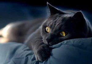 Ngủ mơ thấy mèo đen cào người yêu bạn, đường bỏ qua con số 37 - 73